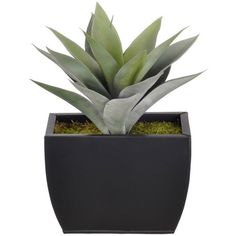 Artificial Frosted Green Succulent, Small Matte Black Zinc -... ❤ liked on Polyvore featuring home, home decor, floral decor, green artificial flowers, faux florals, artificial trees, fake trees and faux floral arrangement