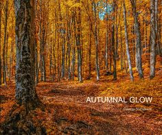 Pictures of colorful autumn woods around a magical place in Romania : my Brasov - City The lush photography and accompanying spiritual passages evoke the rhythms and textures of autumn, the most magical time of the year!
