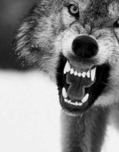Grandma...what big teeth you have!