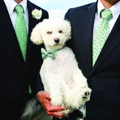 Wedding Dogs: 7 Ways to Dress Your Wedding Dog - Wedding Planning - Bridal Party