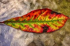 Part of the 2013 Leaf Portraits Series.