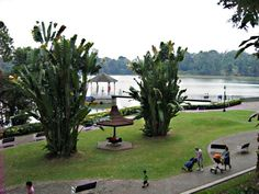 A hidden gem from Singapore. Macritchie Reservoir
