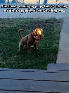 Funny Animal Pictures - View our collection of cute and funny pet videos and pics. New funny animal pictures and videos submitted daily. Funny Animal Memes, Dog Memes, Cute Funny Animals, Funny Animal Pictures, Dog Pictures, Funny Dogs, Hilarious Memes, Videos Funny, Cute Puppies