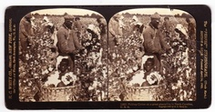 This is a fine 100+ year old STEREO VIEW of ethnic folk picking cotton. . Very good condition with usual minor aging characteristics. $45