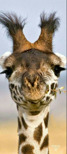 Africa - Close up of a giraffe, in Masai Mara National Reserve, Kenya - ©Jayanand Govindaraj Animals And Pets, Baby Animals, Funny Animals, Cute Animals, Baby Elephants, Nocturnal Animals, Animals Photos, Unique Animals, Safari Animals