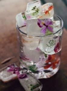 Freezing edible flowers in ice cubes for drinks.
