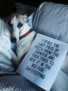 oh, naughty dog!  sounds like someone I know.