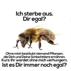 Lasst die Bienen nicht aussterben !!!