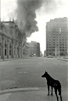 Chile, September 11th, 1973. A lonely dog stares at the horror, while the military forces drop their bombs over the goverment palace.