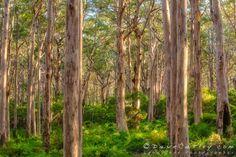 Dave Catley specialises in Fine Art Landscape, Wildlife & Nature Photography of Western Australia. Margaret River Western Australia, Wildlife Nature, Diy Canvas, Landscape Photographers, Large Prints, Nature Photography, Photography Ideas, Twilight, Fine Art