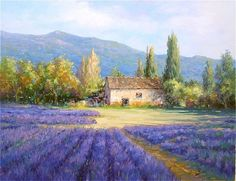 Lavender Field by Alex Perez