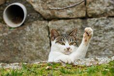 mariusu:cat (by NEKOFighter)