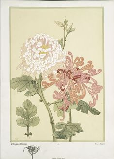Chrysanthèmes - ID: 96700 - NYPL Digital Gallery