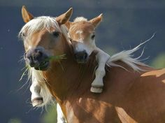 TOP 40 Young Animals and Their Mothers