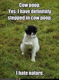 Dumb but funny cuz I can see my cat and some of my friends actually saying this!