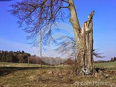 Bike Beside Large Damaged Tree - Download From Over 30 Million High Quality Stock Photos, Images, Vectors. Sign up for FREE today. Image: 51638070