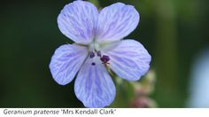 Gardening Features - Timely Gardening Advice from Crocus.co.uk