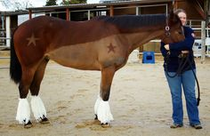 Your Turn: Budweiser Clydesdale Makeover | HORSE NATION