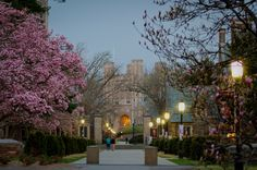 Princeton University in Spring