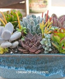 Products+I+Like+|+Succulents+and+Sunshine