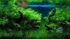2005 AGA Aquascaping конкурс