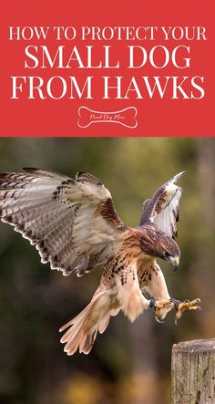 How to Protect Your Small Dog From Hawks | Dog Care Tips | Pet Safety |