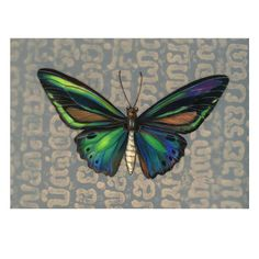 BirdWing Butterfly Art Ready to Frame 8 x by BugsBeastsBotanicals, $20.00