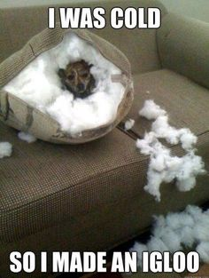 hahah #animals #funny #humor #dogs.  This doesn't actually make me smile since my dog does the same thing...but what r u going to do?  She knows she's in trouble and puts herself in time-out in her kenner!  So, kind of its funny...kind of!