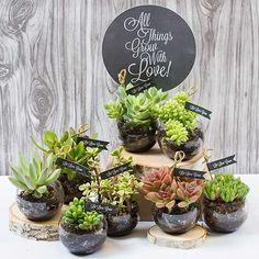 So cute succulent favors!