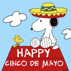 201 Best Cinco De Mayo Images In 2020 Cinco De Mayo Bones Funny