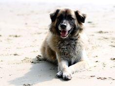 Bloggerhund Paul Dogs, Animals, Hamburg, Animales, Animaux, Doggies, Animal, Animais, Dieren