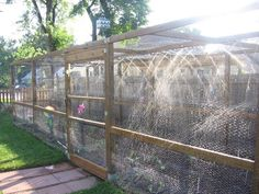 Enclosed Garden enclosed garden area enclosed with chickenwire