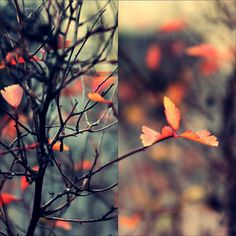 Diptych Photography : The Art Of Combining Two Images Photography Courses, Life Photography, Digital Photography, Photo Class, Photo Projects, Flower Photos, Cool Art, Autumn, Fall Leaves