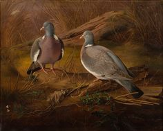 Things of beauty I like to see, Ferdinand von Wright ( - Common wood. Wood Pigeon, Wright Brothers, Ferdinand, Oil On Canvas, Tumblr, Birds, Animals, Beauty, Animales