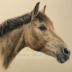 """Mi piace"": 62, commenti: 1 - Gillian Heaphy (@gillianussherart) su Instagram: ""Fred, Pastel, 10"" x 12"" #horse #equine #pony #horsesofinstagram #horseartist #horseart…"""