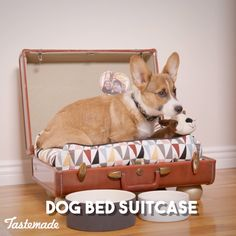 The dog days are just getting started! Learn how to turn an old suitcase into th… The dog days are just getting started! Learn how to turn an old suitcase into the perfect place for your pup to snooze, here. This is one doggone good DIY project! Diy Projects Videos, Diy Videos, Diy Projects For Dog Lovers, Hacks Videos, Diy Dog Bed, Old Suitcases, Pet Furniture, Furniture Movers, Animal Projects