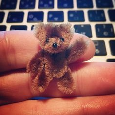 1 million+ Stunning Free Images to Use Anywhere Pipe Cleaner Projects, Pipe Cleaner Art, Pipe Cleaner Animals, Pipe Cleaners, Diy Arts And Crafts, Creative Crafts, Crafts To Make, Fun Crafts, Crafts For Kids