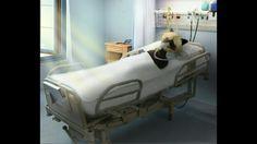 Kocour nás opouští. Ale my mu věříme😂   kocour je v nemocnici po souboji s akumou. Smutný obrázek. Umirajici kocour.