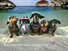 Find cute and funny costumes for sausage dogs, make your sausage dog even more adorable when dressed in a cute dachshund costume. Dachshund Funny, Dachshund Puppies, Weenie Dogs, Dachshund Love, Cute Puppies, Cute Dogs, Dogs And Puppies, Daschund, Doggies