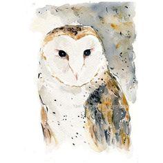 Barn Owl art print, watercolor barn owl print, wild life art, birds... ($21) ❤ liked on Polyvore featuring home, home decor, wall art, bird wall art, halloween wall art, bird home decor, watercolor wall art and halloween home decor