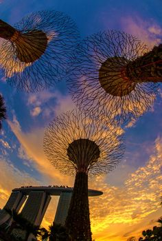 Sunset in Supertree Grove and Gardens by The Bay, Singapore