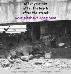 Caption says it all!!  Do not support the Circus or Zoos!!  They are suffering!