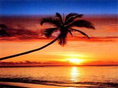 Beautiful sunset with palm tree