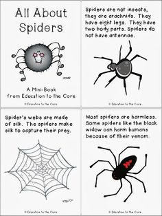 Education to the Core: Spiders: A FREE Mini-Book and Writing Reflection Printable