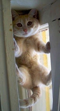 How did I get up here?? #animals #pets #cats #kittens #funny #funny pics #funny pictures #laughable