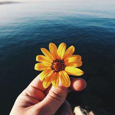 Anche in riva al mare ci sono fiori petalosi!  Il nostro contributo per aiutare il piccolo Matteo a far entrare la parola #petaloso nel vocabolario italiano: lo facciamo con questa bella foto di @luchitopres taggata #Enjoytheblue e #ilmareovunque  by bluewago