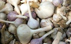 9 Steps for Big Garlic! at www.GrowOrganic.com