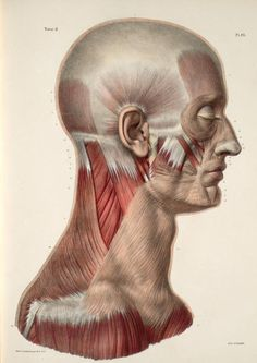 Vintage Medical Human Head Neck Muscle Anatomy Poster Re-Print