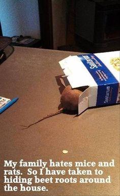 hiding beet roots @Lisa Buechele  Hmm sound pretty fun!