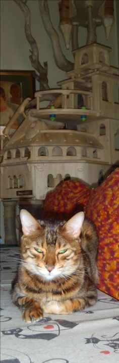 Frida e il suo castello #luxury cat castle #cat tower #cat tree #special playzone for cats #cat toy #cat enclosure #pet design #amazing cat scratching #cat scratch forniture #cat house    www.domusfelis.com